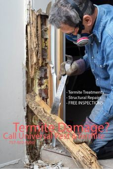 termite-damage-man